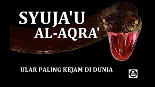 inilah syujaul aqra ular paling kejam di dunia