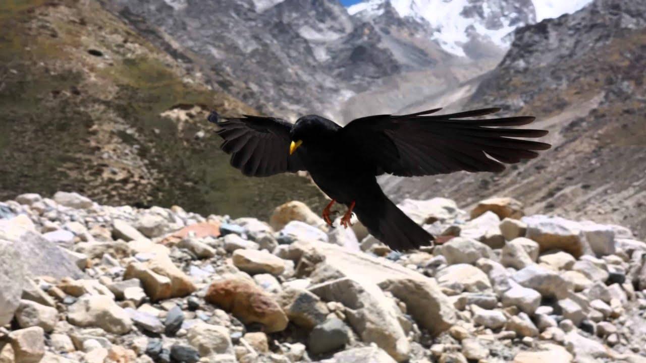 Gomukh Gangotri Glacier Stock Images - Dreamstime