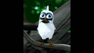 the talking lary bird funny video