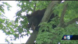 Bear spotted on Dartmouth College campus