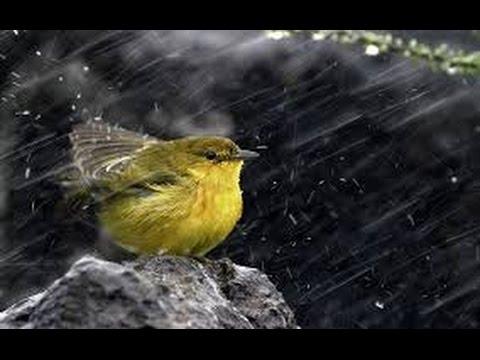 Does God Send The Rain?