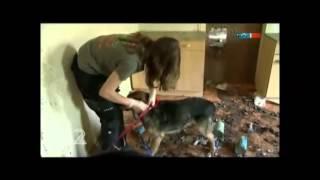 Tiere die leiden müssen