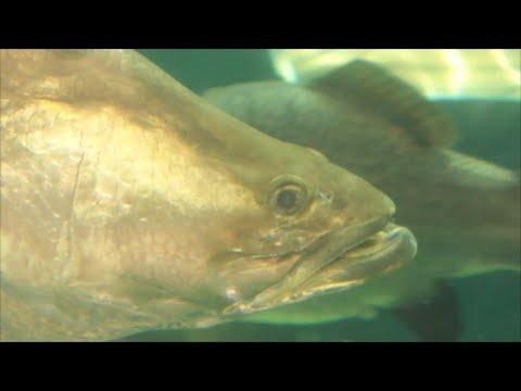About Mouths Of Fish And Feeding