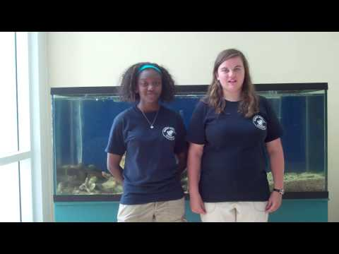The Marine Science Consortium SEA S.T.A.R. PROGRAM - 2012 interns