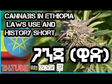 Cannabis (marijuana) in Ethiopia laws use and history short ጋንጃ(ዊድ) በኢትዮጽያ ታሪክና ህጎች። info graphic