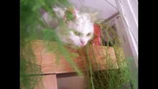 Слайд Шоу Кошки И Котята
