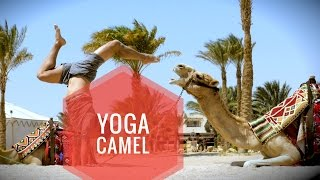 Gambar cover Yoga with a Camel