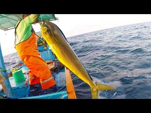 Pesca de mahi mahi - Dorado - #dolphinfish