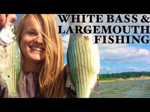 White Bass, Walleye, And Largemouth Bass On Saylorville And Big Creek!