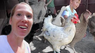 30 chickens take the RIDE of their lives