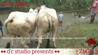 177 | Bolods Unloading and Shower Time | River Side | Village Haat | Paragram Diaries | ZbGH 2019