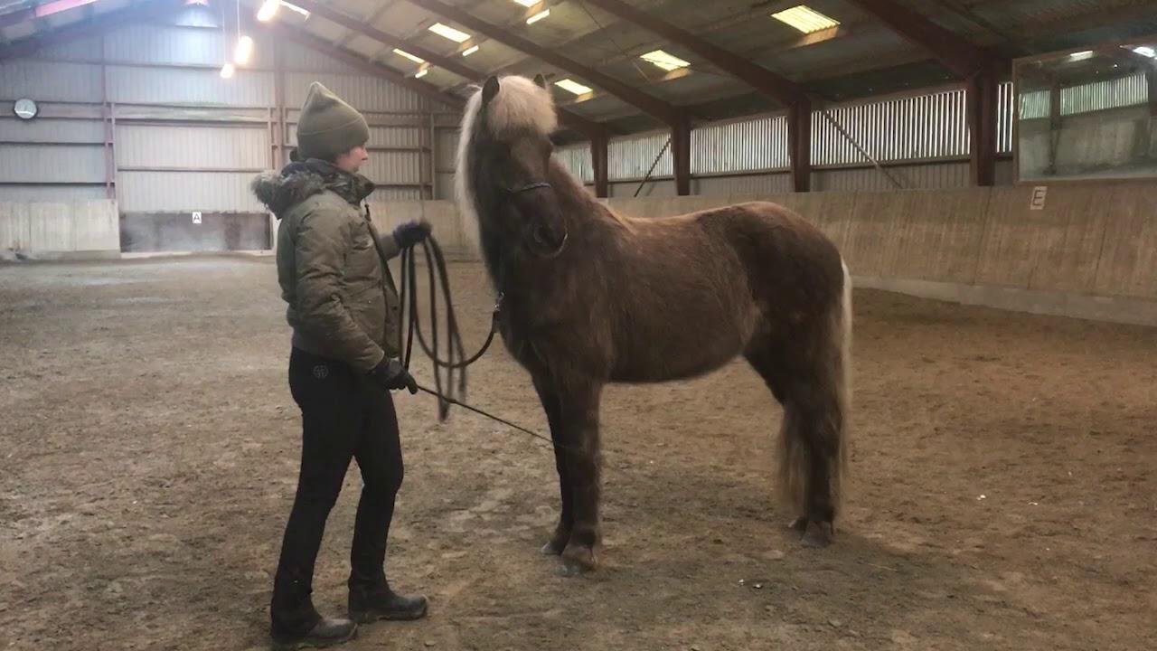 Nervøs Hest