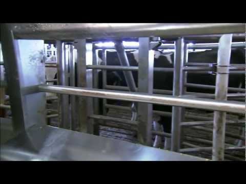 Alberta Milk: The Journey of Milk