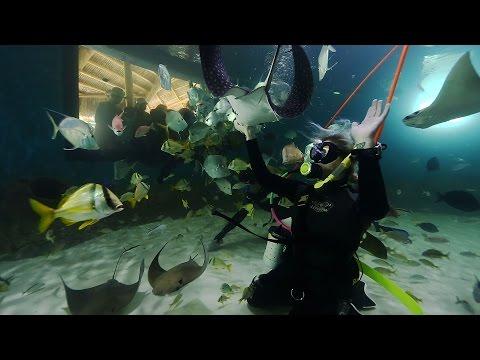 Immerse Yourself In  Florida Keys Aquarium Encounters