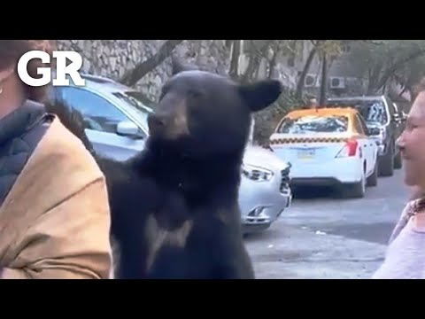 O curioso xesto dun oso en México: acércase a unha muller e acarícialle o pelo