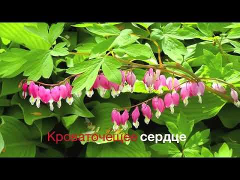 видео: 37 й клип Флудилка групп  Любе, Лене и Любе