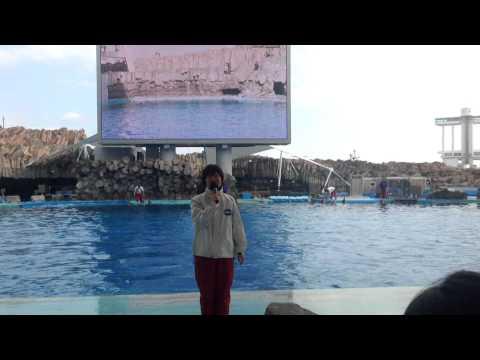 名古屋港水族館 イルカショー (Port of Nagoya Public Aquarium)
