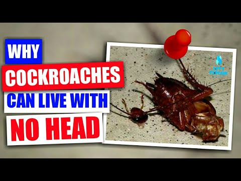 Why Cockroaches Can Live Without Their Heads(2018)| Let's Explain #3