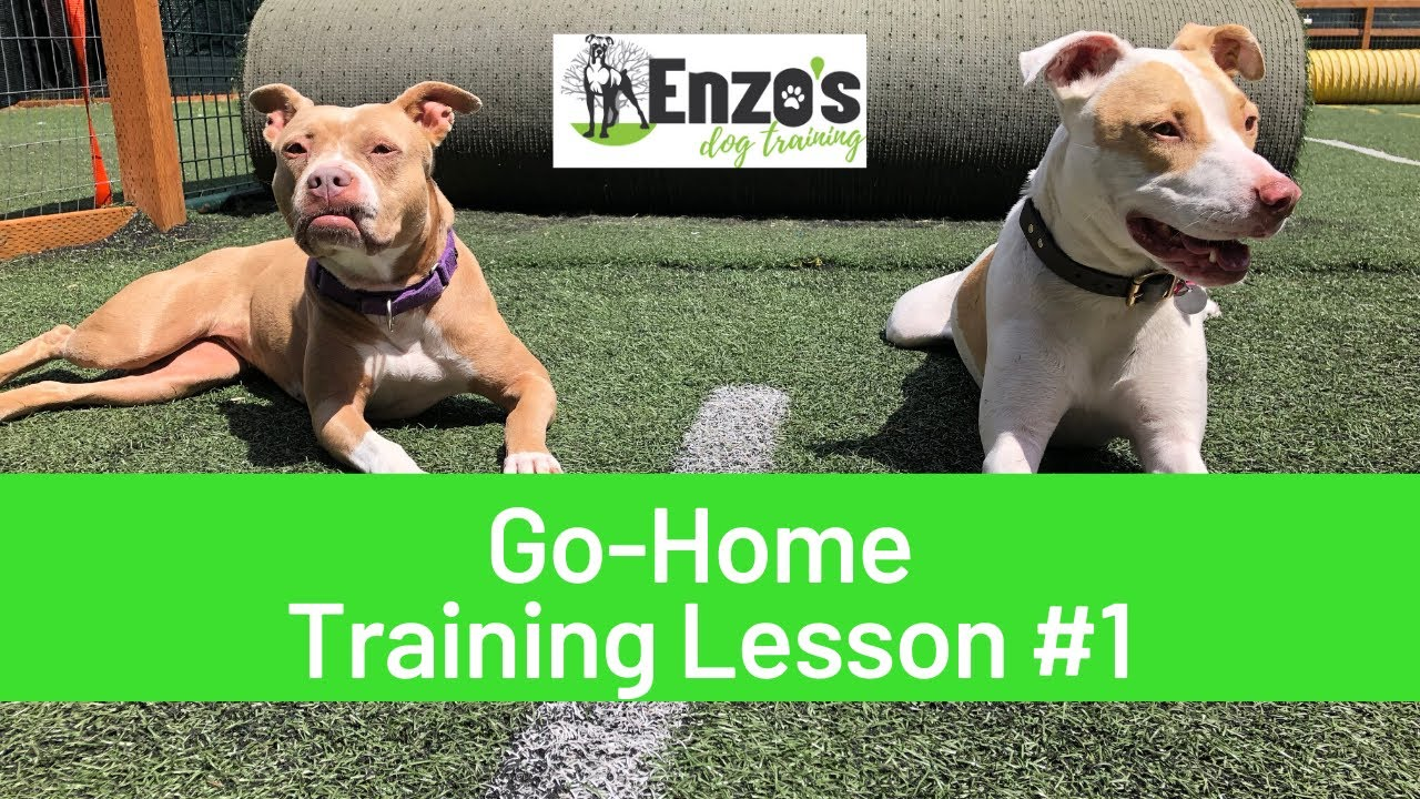 Dog Training Lesson Pointers for New Owners