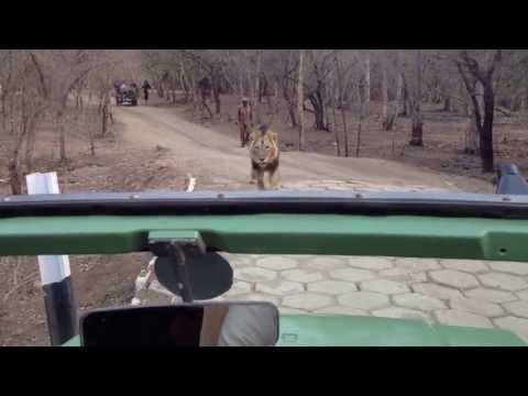 Gir Lion Safari