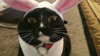 Смешные коты приколы с котами – КОШКИ 2019 #3😸