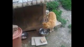 눈치보며 닭고기먹는 고양이