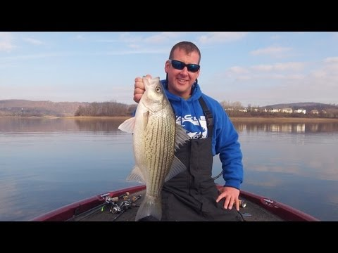 The Binsky Blade Bait Instructional Video