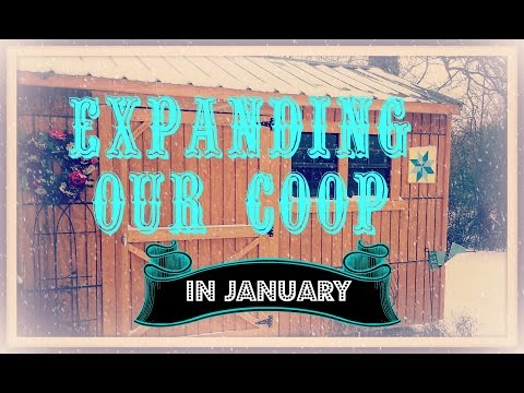 Expanding Our Coop~In January