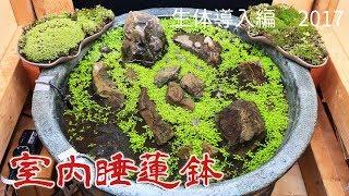メダカの越冬用に設置した睡蓮鉢です。 ホームページ http://www.sasura...