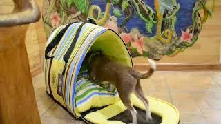 видео Сумки и переноски для кота в Харькове