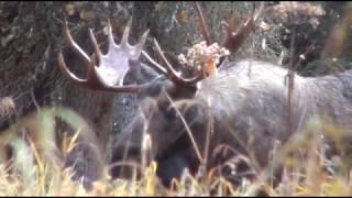 Hmoob Yos Hav Zoov Nyob Alaska 2016