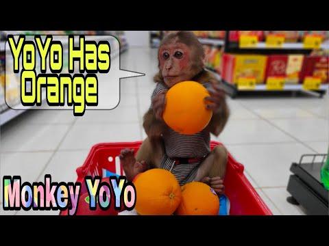 Monkey Baby YoYo Goes To The Supermarket To Shop
