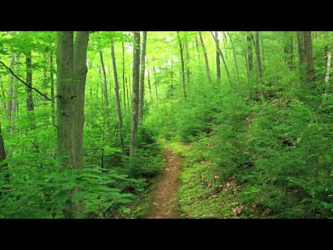 [archive] Forest Energy Guided Meditation - Binaural ASMR