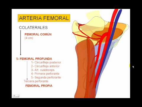 VASCULAR MIEMBRO INFERIOR 3.avi - YouTube