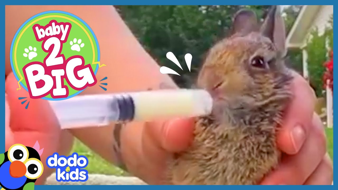 Wild Rabbit Is So Tiny, He Sleeps In Our Scarf! | Baby 2 Big | Dodo Kids