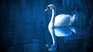 Musik Relaksasi Romantis I Meditasi I Yoga