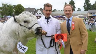 BWCS CENTENARY CELEBRATIONS 2019 - ROYAL WELSH | COWSHEDTV