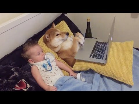 Baby and Dog Enjoy 'Cartoon Time' Together