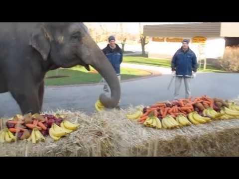 African Lion Safari 2013 Elephant Waltz Cambridge Ontario Canada