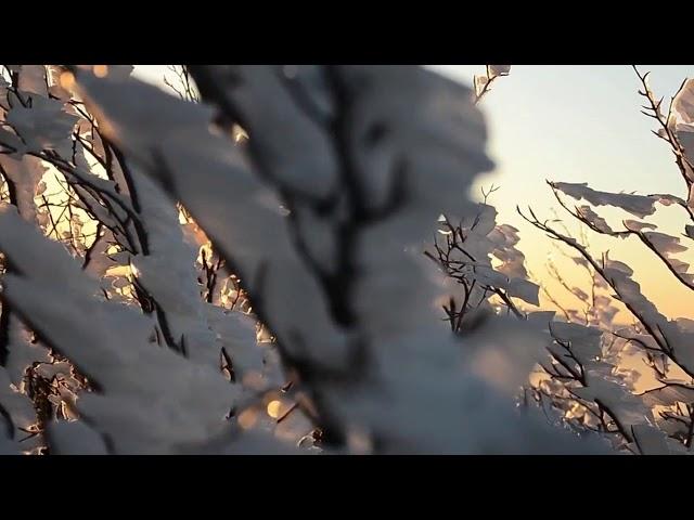 Изображение предпросмотра прочтения – ЭлеонораФурсова читает произведение «Весна (Зима не даром злится…)» Ф.И.Тютчева