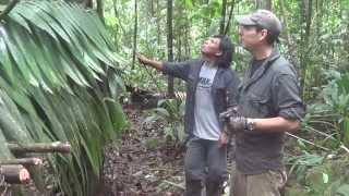 Jungle Survival Making Shelter