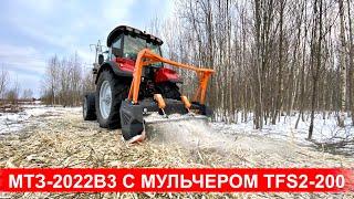 Трактор Беларус-2022В3 с мульчером TMC Cancela TFS2-200 на расчистке от деревьев , кустарника и пней