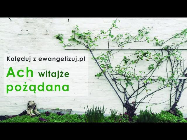 Ach witajże - kolęda - kolęduj z ewangelizuj.pl