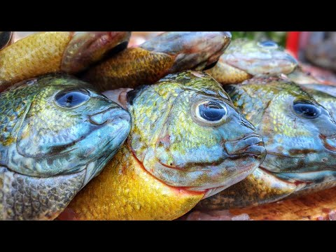 Wisconsin Lake Fishing For Panfish In BEAUTIFUL Madison Wisconsin