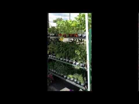 WPW Growers - Fresh Seasonal Local flowers and plants - StayVEGAN.com