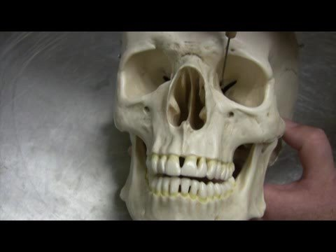 Dr. Fabian Identifying Parts of the Skull Part 1 of 2