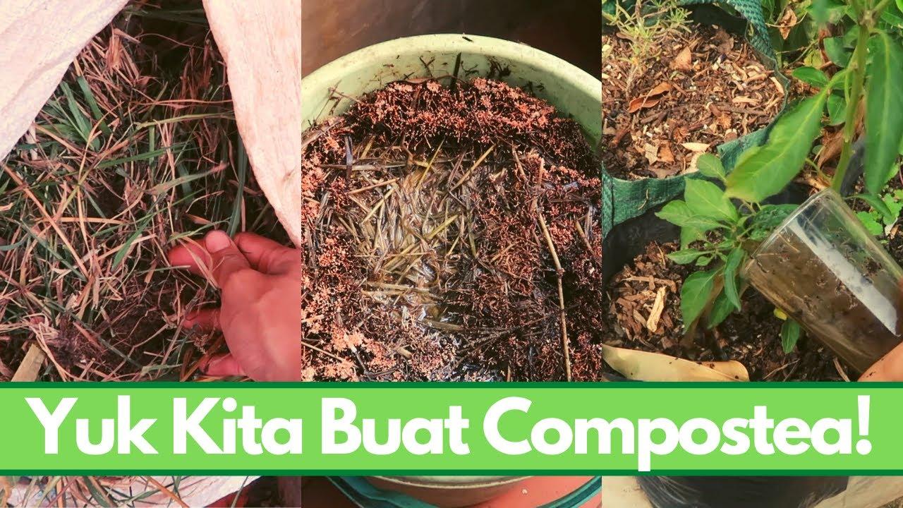 Cara buat compost tea dari gulma (rumput liar) / pupuk organik cair