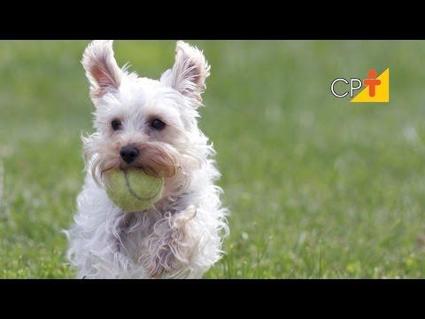 Curso CPT Hotel para Cães e Gatos
