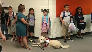 Service dogs attend first day of school