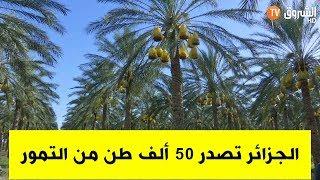 الجزائر تصدر 50 ألف طن من التمور